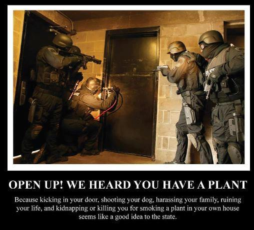 Open up we heard you have a plant